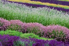 The lavender was awesome!